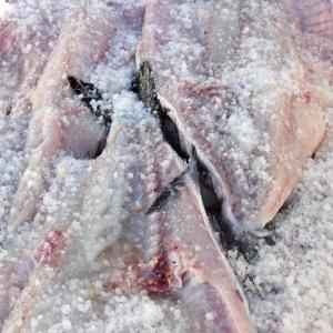 Impregnating Fish with Salt